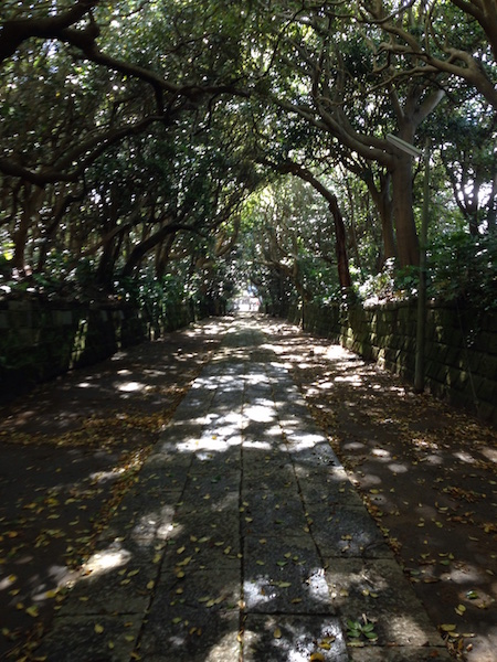 森林のトンネル