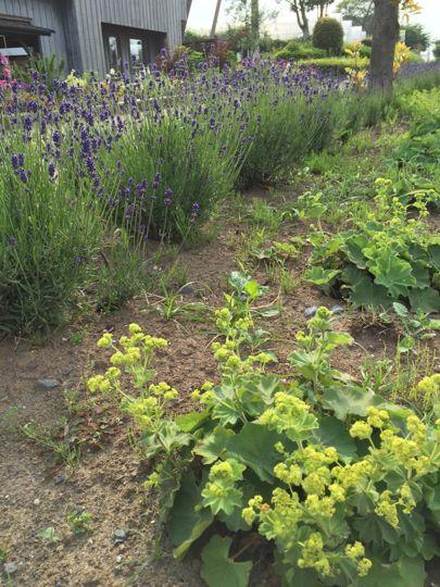 黄色のお花の写真